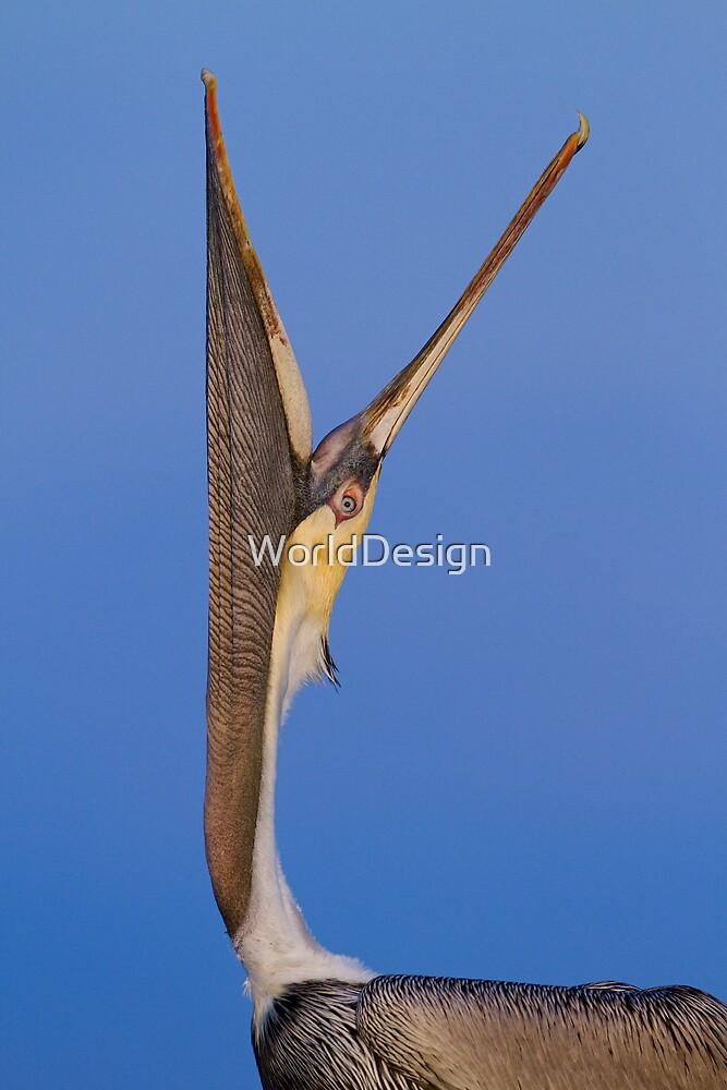 Pelican Stretch by William C. Gladish