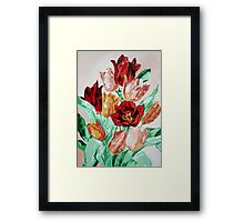 A Tulip Collection Framed Print