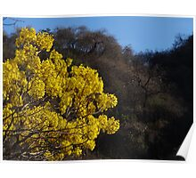 Sierra Madre Occidental - light and colors I - luz y colores Poster