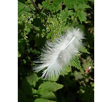 Feather in Sunlight Photographic Print