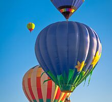 Hot Air Balloons by Reese Ferrier