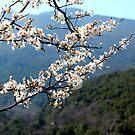 spring by mkokonoglou