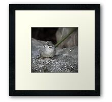 Chilling House Sparrow I low colored Framed Print