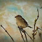 Sparrow's Watching by Trudy Wilkerson