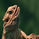 Central Bearded Dragon by Richard Eijkenbroek