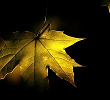 Autumn Leaves by Johan nordholm