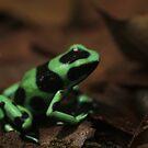 Commando Frog by Seth LaGrange