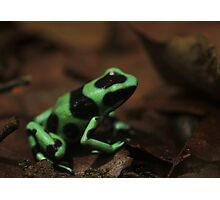 Commando Frog Photographic Print