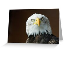 The stare of the Bald Eagle Greeting Card