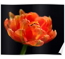 Tulip Flame Poster