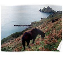 South Devon Kingswear Dartmoor Ponies Grazeing Early Autunm .3. Poster