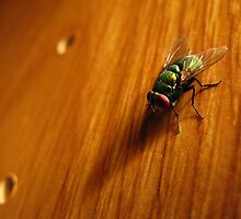 Housefly by Stephen Oravec