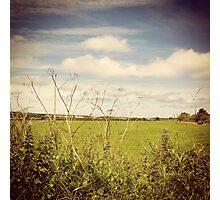 Irish Green Fields Photographic Print