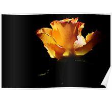 Orange rose - Part 1 Poster