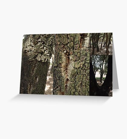 Cork Oak Trees Canberra ACT Greeting Card