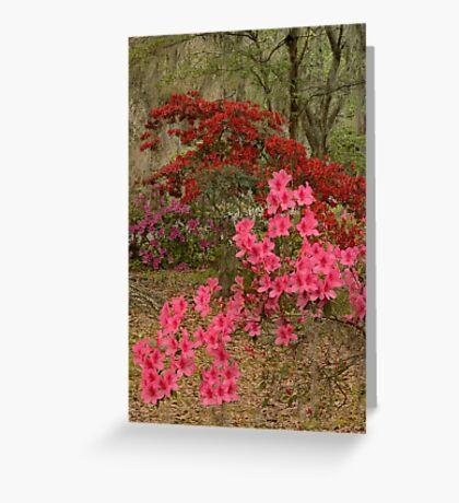The Azaleas In Bloom Greeting Card