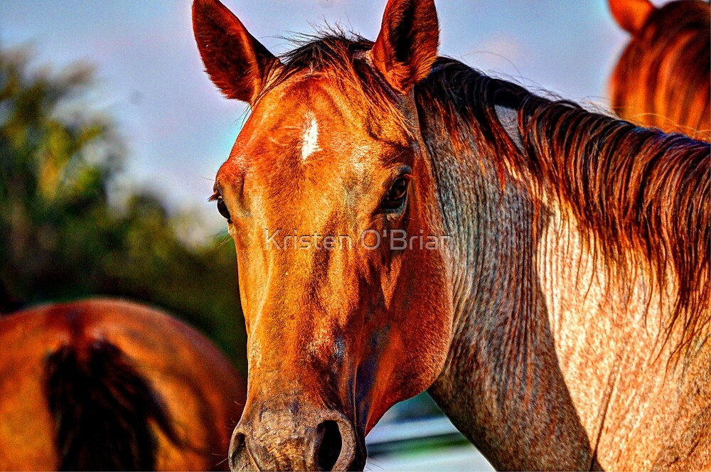 Red Roan Mare by Kristen O'Brian