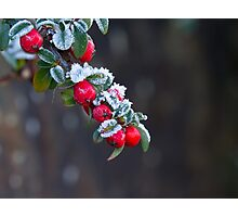 Red Berries With Frost Photographic Print