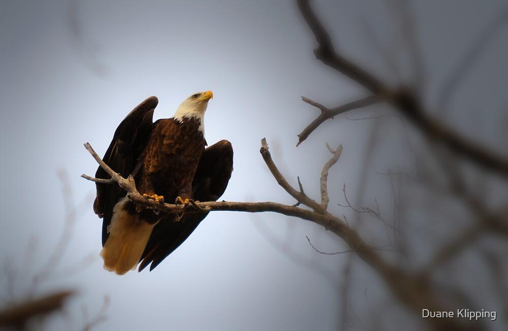 Perched Eagle Retro by Duane Sr