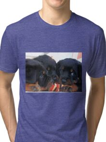Three Rottweiler Puppies Playing Tug Tri-blend T-Shirt