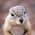 Cheeky Lil Chap by Shaun Colin Bell