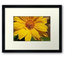 Sunflower & Shadows  Framed Print