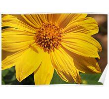 Sunflower & Shadows  Poster
