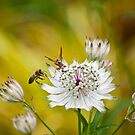 Hornet & Bee Busy on White Flower by Orbmiser