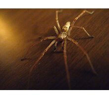 Wolf Spider #2 Photographic Print