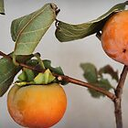 Persimmons by Lynda Heins