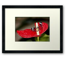 Glasswing on Lily Framed Print