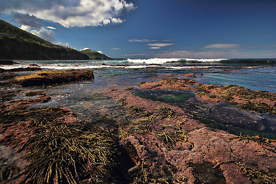 Low Tide Colours by yolanda