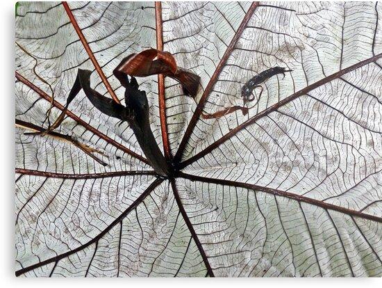 Beauty of a fallen leaf by globeboater