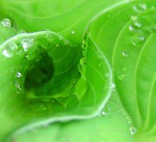 Droplets on leaf whorls by ailsapm