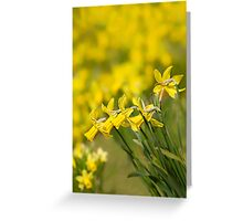 Daffodil Chorus Greeting Card