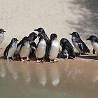 Fairy Penguin n Reflection by Sally Haldane