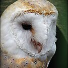 """""""Taken at the """"Screech"""" Owl Sanctuary""""  """" Name of the owner"""" by Malcolm Chant"""