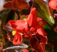 Red Begonia Sticker