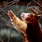 Tree Kangaroo: Reach by Daniela Pintimalli