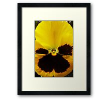 Golden Black Eyed Pansy Violet Yellow Flower Framed Print