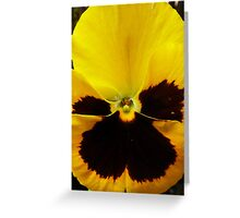 Golden Black Eyed Pansy Violet Yellow Flower Greeting Card