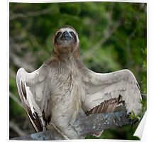 The winged sloth Poster