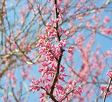 Blooming Spring Buds by Dawne Dunton