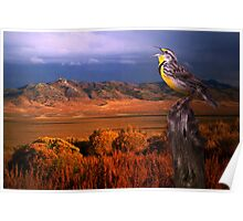 Evening Meadowlark Poster