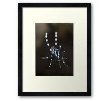 Aedes Framed Print