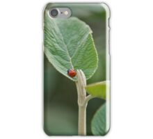 Ladybug iPhone Case iPhone Case/Skin