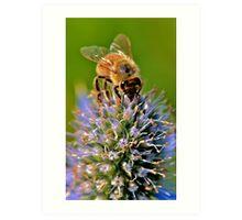spring Bee Art Print