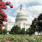 Capitol Blooms by AH64D