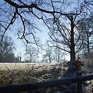 Frosty Field in Winter by Sue Robinson