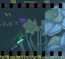 Holga Sprocket Flowers at Glastonbuy by lanesloo